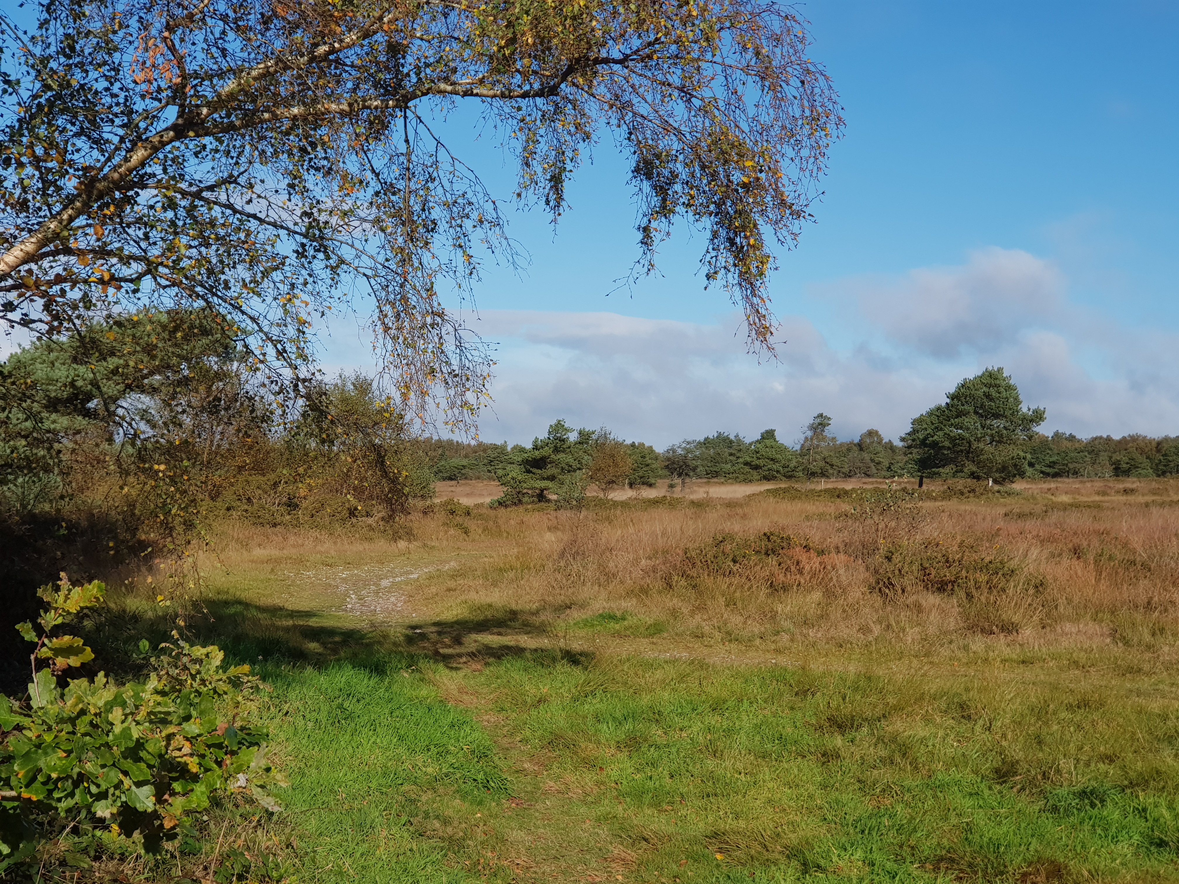 Ideford Common